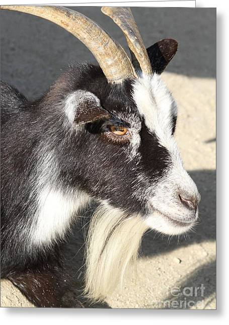 Goat 7d27405 Greeting Card by Wingsdomain Art and Photography