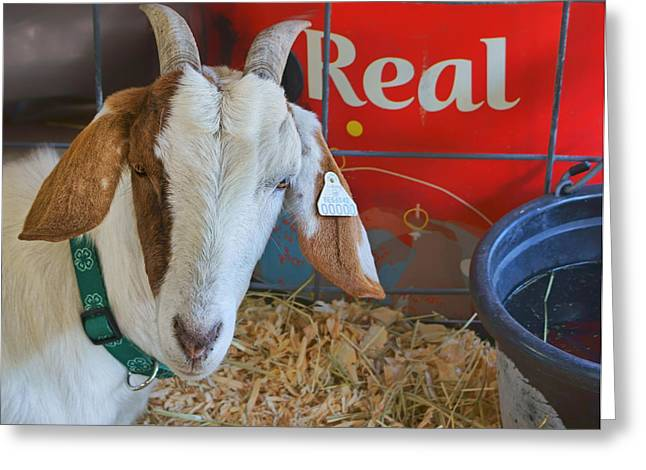 Looking At Viewer Greeting Cards - Goat at County Fair Greeting Card by Nikolyn McDonald