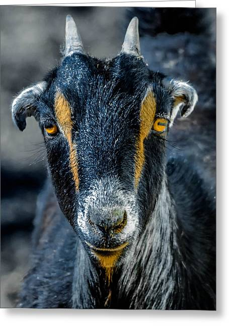 Chevon Greeting Cards - Goat Greeting Card by Brian Stevens