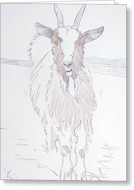 Quirky Drawings Greeting Cards - Goat Greeting Card by Mike Jory