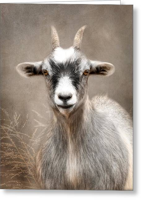 Goat Digital Greeting Cards - Goat Portrait Greeting Card by Lori Deiter