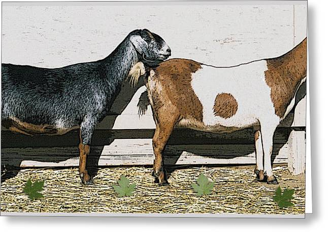 Sketch Pyrography Greeting Cards - Patient Goaties in Line Greeting Card by Bir Git