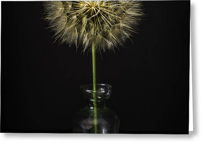 Goat's Beard In Vase Greeting Card by Mitch Shindelbower