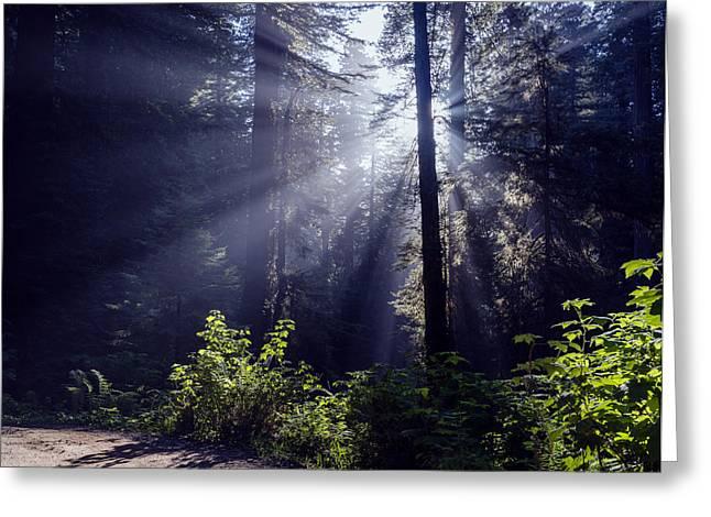 God Beams Greeting Cards - God Rays through the fog Greeting Card by Vishwanath Bhat