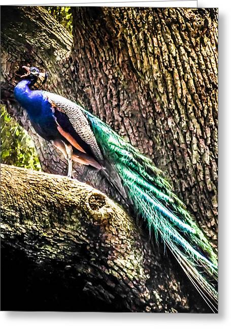 Blue And Green Photographs Greeting Cards - Gods Heavenly Creatures Greeting Card by Karen Wiles