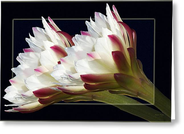 God's Trumpets Greeting Card by Phyllis Denton