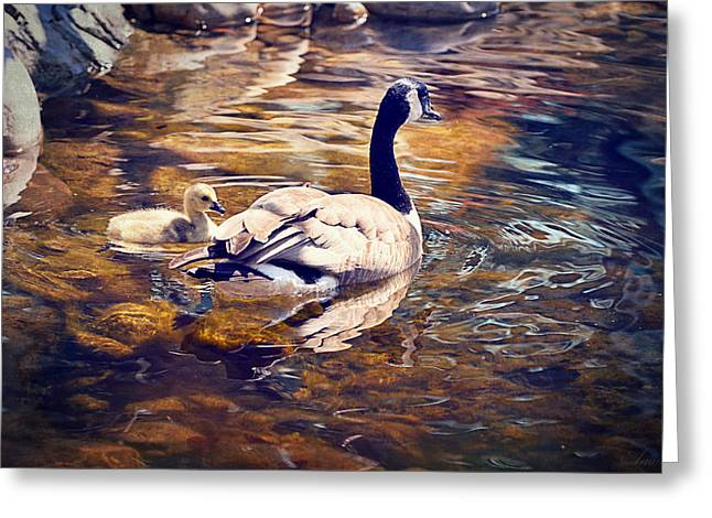 Mother Goose Greeting Cards - Going Home Greeting Card by Maria Angelica Maira