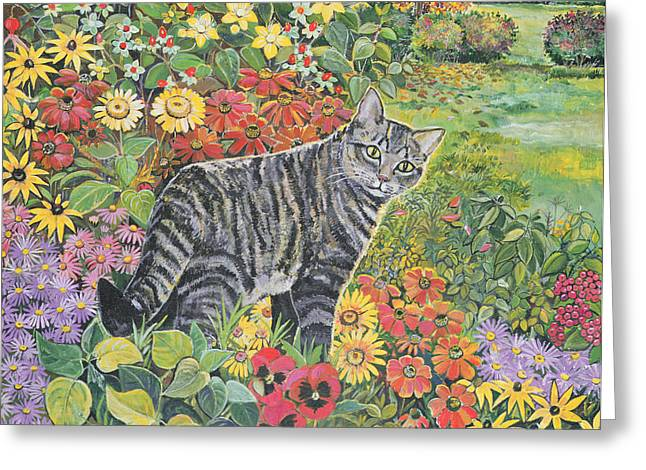 Tabby Greeting Cards - Going My Way? Greeting Card by Hilary Jones