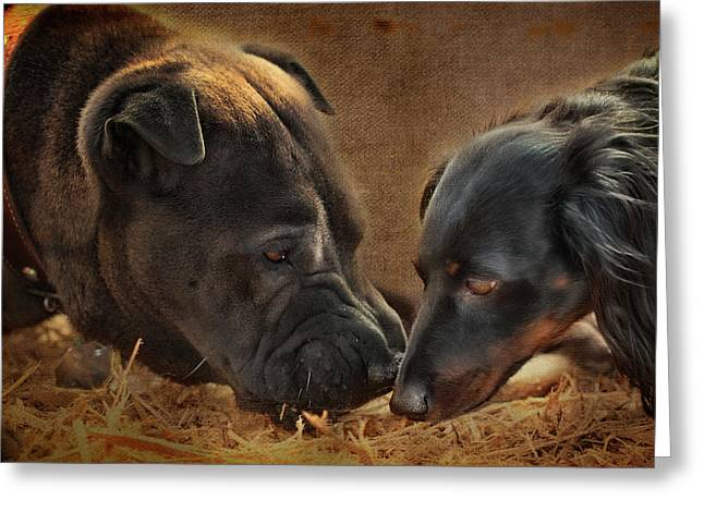 Black And Tan Dachshund Greeting Cards - Going Nose to Nose Greeting Card by Terry Fleckney