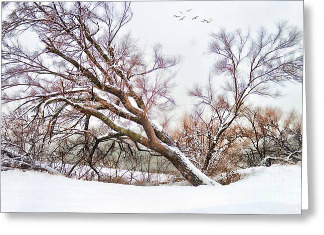 Snow Scenes Greeting Cards - Going Softly Into Winter Greeting Card by Betty LaRue