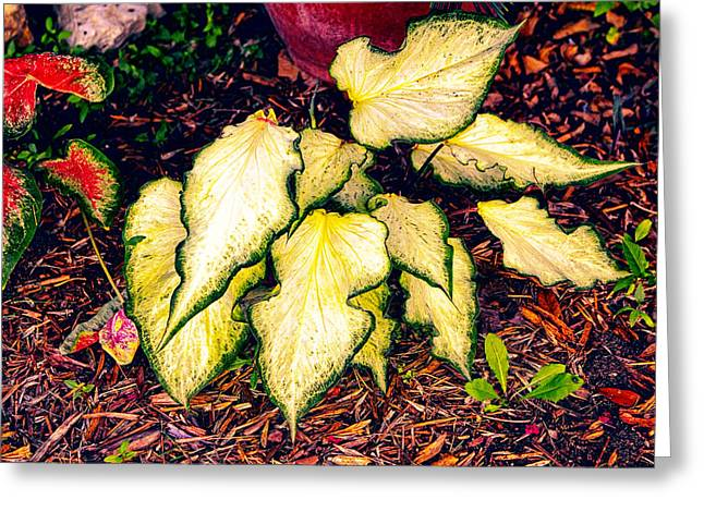 Altered Clay Greeting Cards - Gold Bi Color Leaves Greeting Card by Linda Phelps