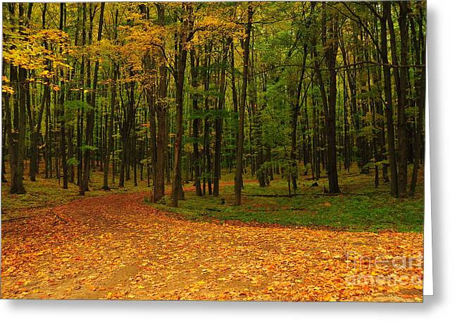 Best Sellers -  - Fall Trees Greeting Cards - Gold Carpet Treatment Greeting Card by Terri Gostola