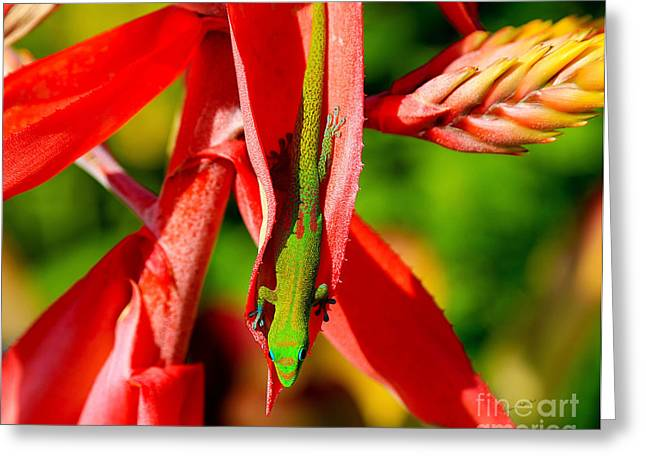 Gecko Print Greeting Cards - Gold Dust Day Gecko Greeting Card by Patricia Griffin Brett