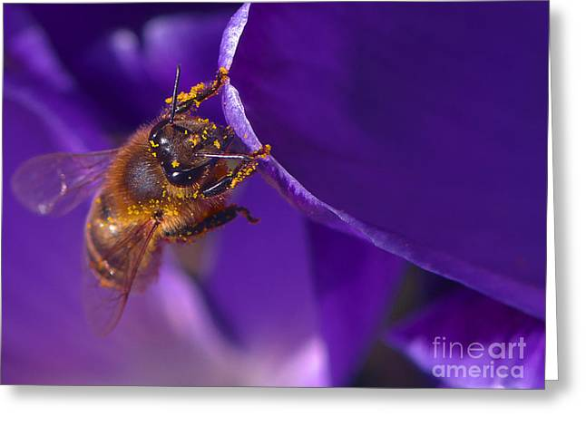 Honeybee Greeting Cards - Gold Dust Greeting Card by Sharon  Talson