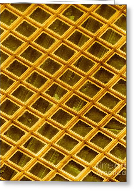 Scanning Electron Micrograph Greeting Cards - Gold Electron Micrograph Grid Greeting Card by David M. Phillips