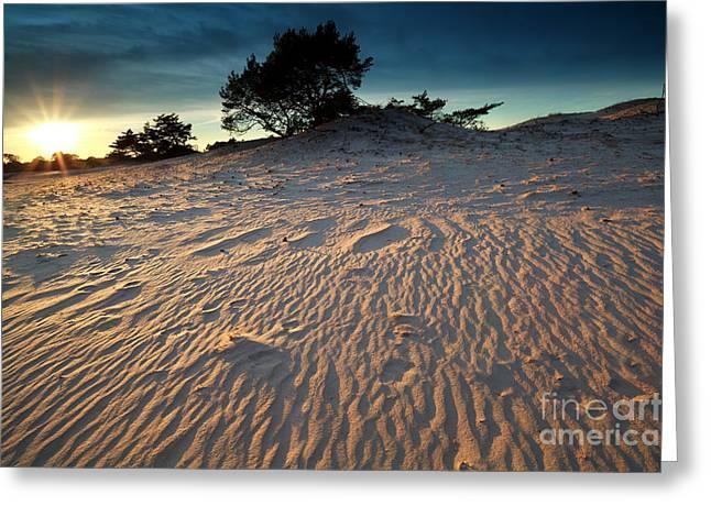 Gelderland Greeting Cards - Gold Evening Sunshine Over Sand Dunes Greeting Card by Olha Rohulya