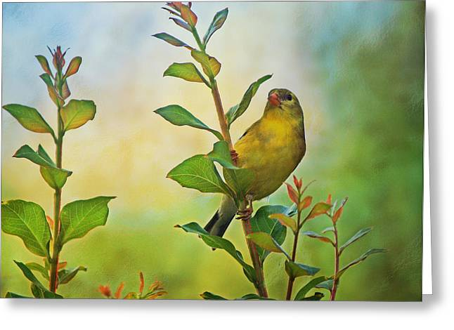 Gold Finch On Branch Greeting Card by Sandy Keeton