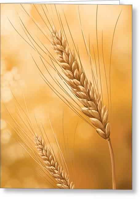 Grains Greeting Cards - Gold grain Greeting Card by Veronica Minozzi