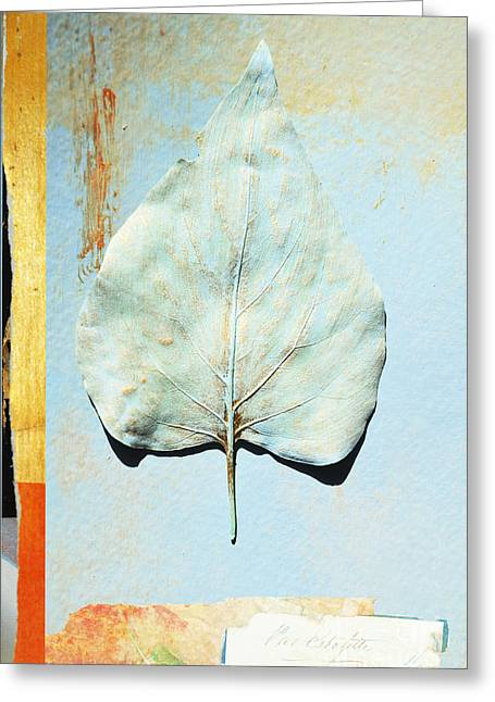 Gilding Greeting Cards - Gold Leaf Botanical Series 2 Greeting Card by Anahi DeCanio