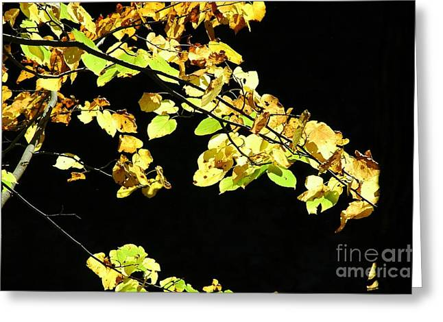 Gold Leave Greeting Cards - Gold On Black Greeting Card by Kathleen Struckle