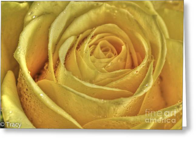 Tracy Hall Greeting Cards - Gold Rose Greeting Card by Tracy  Hall