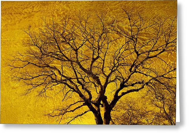 Bare Trees Greeting Cards - Golden  Greeting Card by Ann Powell