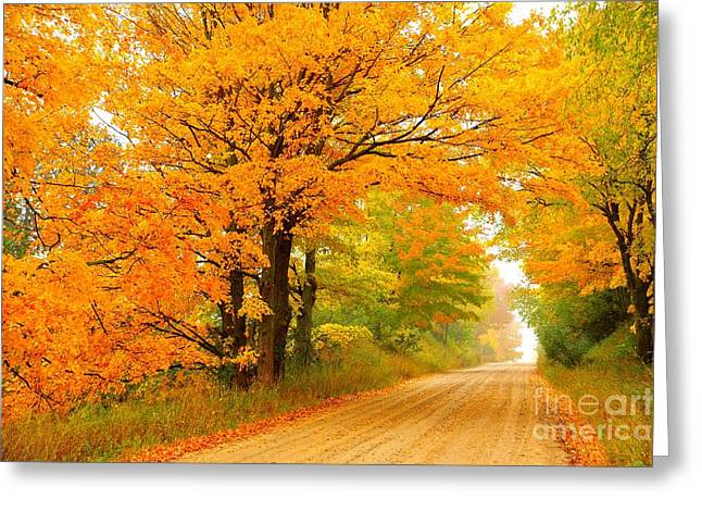 Autumn Trees Greeting Cards - Golden Arch 2 Greeting Card by Terri Gostola