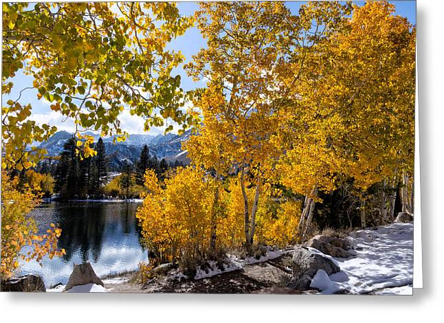 Turning Leaves Digital Art Greeting Cards - Golden Aspen on the Lake Greeting Card by Kathleen Bishop