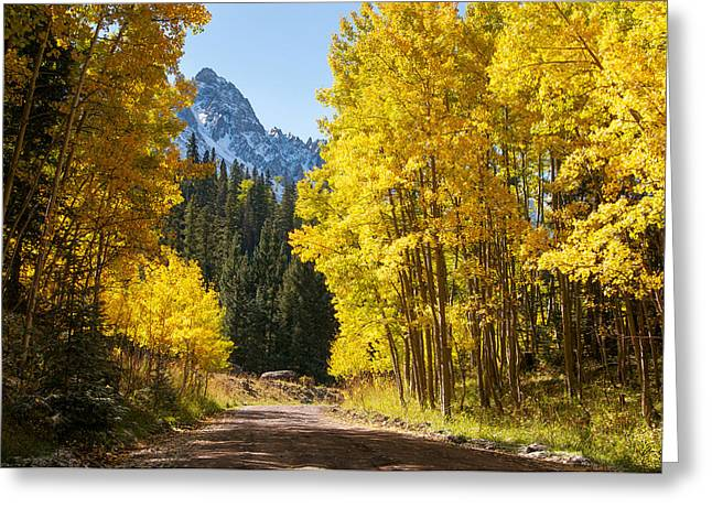 Fall Splendor Greeting Cards - Golden Aspen Road Greeting Card by Aaron Spong