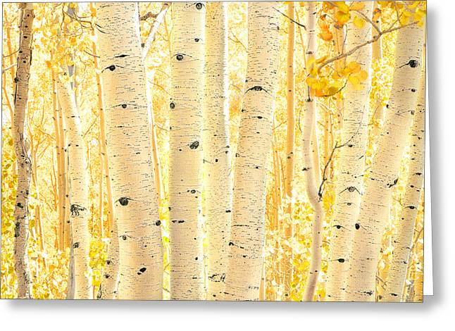 Aspen Grove Greeting Cards - Golden Aspens Utah Greeting Card by Rich Franco