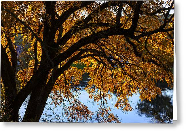 Golden Greeting Cards - Golden autumn leaves Greeting Card by Garry Gay
