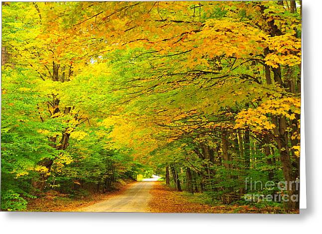 Fall Trees Greeting Cards - Golden Autumn Greeting Card by Terri Gostola