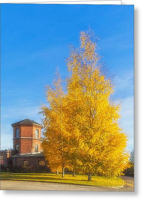 Harmonious Greeting Cards - Golden Autumn Greeting Card by Veikko Suikkanen