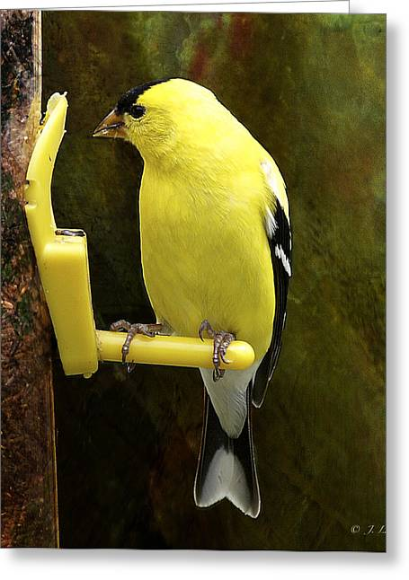 Goldfinch Digital Art Greeting Cards - Golden Beauty Greeting Card by J Larry Walker