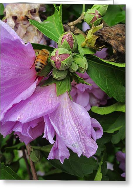 Guy Ricketts Photography Greeting Cards - Golden Bee and the Purple Flower Greeting Card by Guy Ricketts