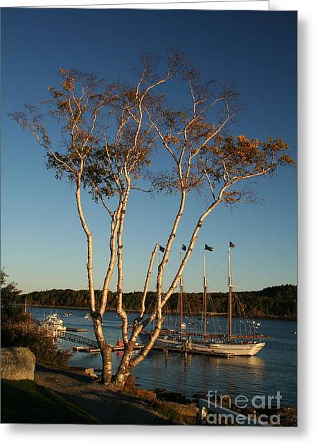 New England Ocean Greeting Cards - Golden Birch by the Harbor Greeting Card by Linda  Jackson