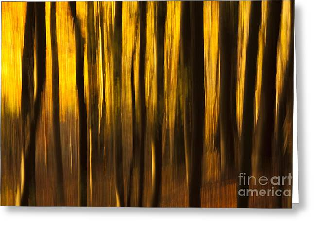 Warm Tones Greeting Cards - Golden Blur Greeting Card by Anne Gilbert