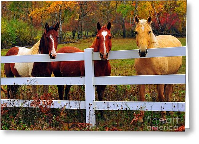 Fall Trees Greeting Cards - Golden Boy and Girlfriends Greeting Card by Terri Gostola