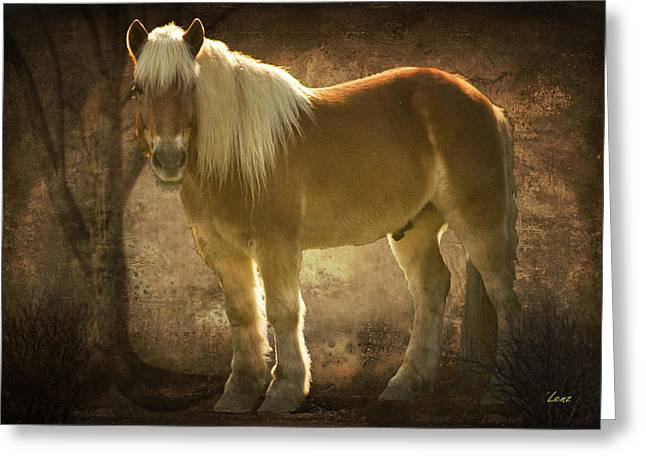 Equine Posters Greeting Cards - Golden Boy Greeting Card by George Lenz