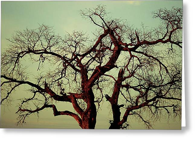 Sunset Framed Prints Pyrography Greeting Cards - Golden Branches Greeting Card by Girish J