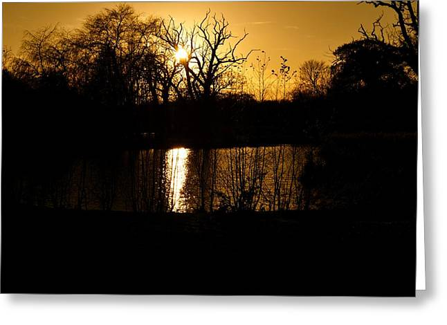 Golden Brown Greeting Card by Dave Woodbridge