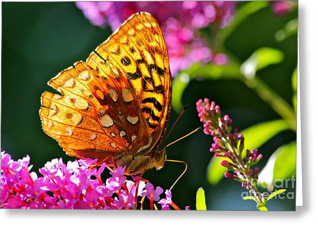 Jay Nodianos Greeting Cards - Golden Butterfly Greeting Card by Jay Nodianos