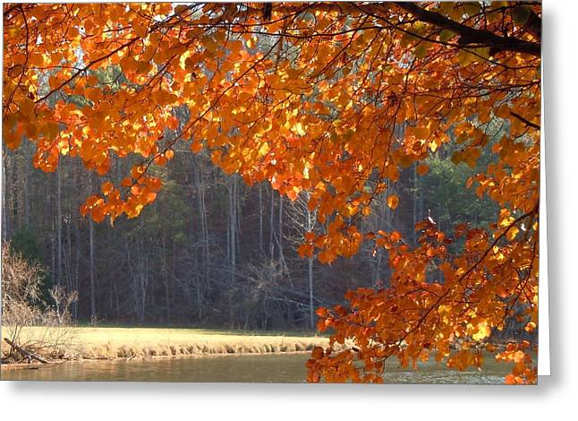 Golden Canopy Greeting Card by Pauline Ross