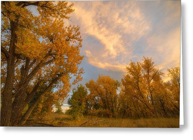Autumn Prints Photographs Greeting Cards - Golden Chatfield Greeting Card by Darren  White
