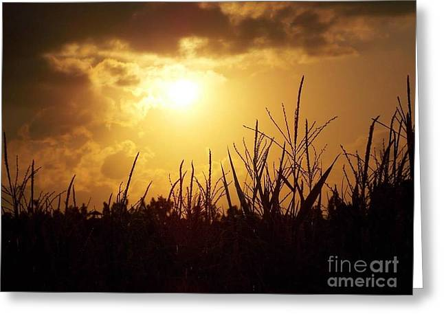 Window Of Life Greeting Cards - Golden Clouds Of Hope Greeting Card by Matthew Seufer