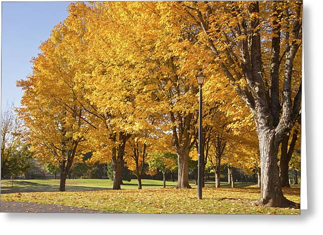 Leasure Greeting Cards - Golden colors in Autumn Bellavista park Oregon. Greeting Card by Gino Rigucci