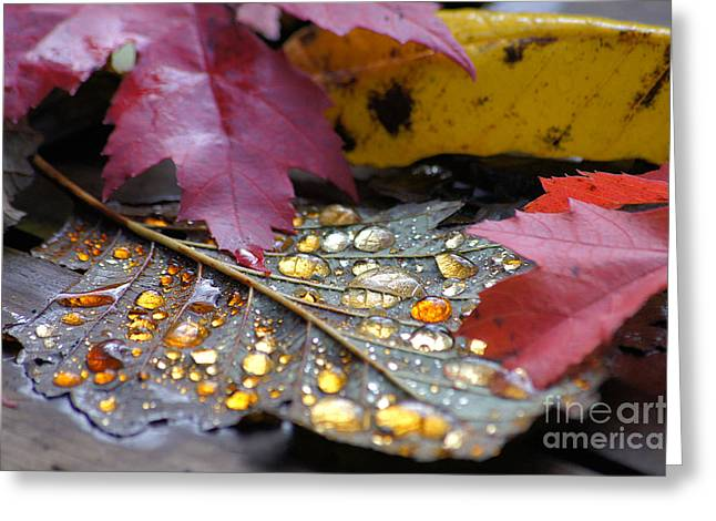 Print Photographs Greeting Cards - Midas Wept Greeting Card by Stanza Widen
