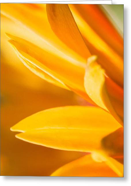 Gift For Photographer Greeting Cards - Golden Daisy Iphone Case Greeting Card by Iris Richardson