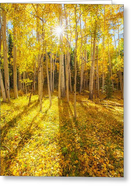 Fall Aspens Greeting Cards - Golden Greeting Card by Darren  White