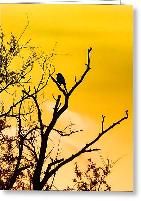 Bird In Tree Greeting Cards - Golden Dawn Greeting Card by Sharon Lisa Clarke